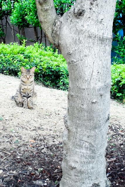 Today's Cat@2011-07-23