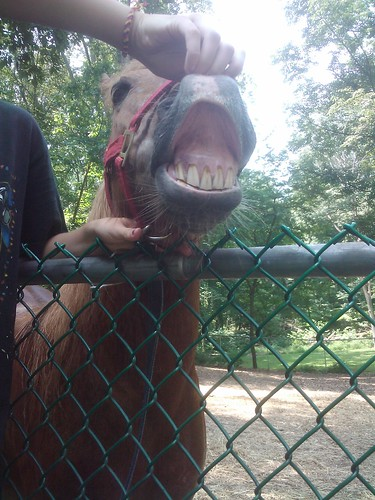 Funny horsey face!