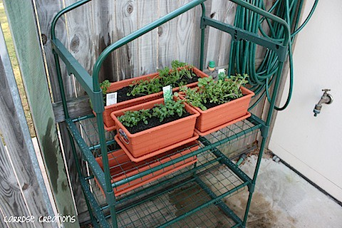 {365} 205 Herb Garden