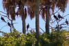 From Captain Doug Maple's Tidewater Tour, these birds were spotted on the Seahorse Key's Garner P...