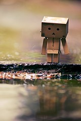 Missing summer.. :-( (generalstussner) Tags: summer reflection nature rain weather canon amazon missing dof sad bokeh cardboard ii raindrops 5d shallow splash fullframe f4 70200mm 200mm danbo revoltech ef70200f4lisusm danboard 5dmarkii