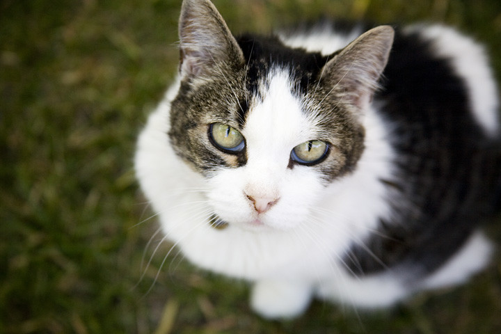 killer kat...