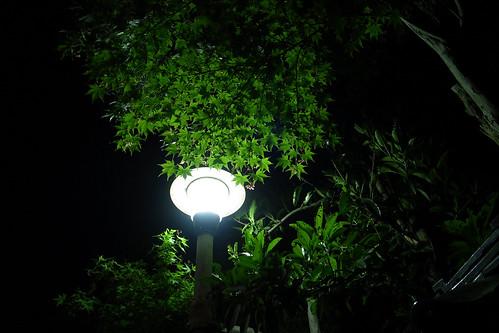 night walker 51