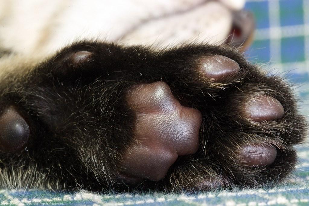a paw pad