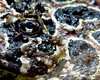 Wart a Face (NTFlicker) Tags: eye argentine closeup frog horned nikoncoolpix8800 louisvillezoo