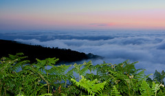 Ferns go to sleep (mari-we) Tags: sunset fern portugal clouds eos madeira 400d