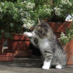 [フリー画像] 動物, 哺乳類, 猫・ネコ, 子猫・小猫, 201108041100