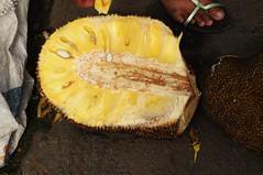 Bali, Besakih - Jackfrucht im Anschnitt 17 (131) (Chironius) Tags: bali indonesien indonesia frucht fruit frutta owoc fruta фрукты frukt meyve buah rosids fabids rosales rosenartige moraceae maulbeergewächse