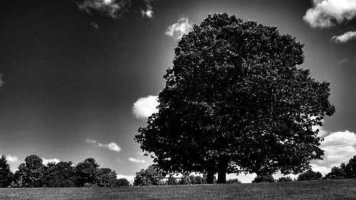 Clinton Park Trees by timlauer