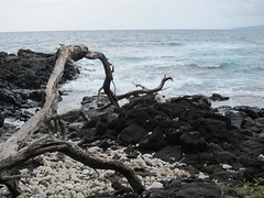Drifter  .......... (Mr. Happy Face - Peace :)) Tags: redgreenblackbeaches oceanfront hawaii bigisand waves art2016 driftwood flickrfriday flickrfriends h2o nature