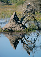 africa water delta safari botswana plains mound termite okavango terraforming vumbura