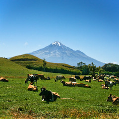 Mount Taranaki (Ed Kruger) Tags: blue trees newzealand summer sky plants sun snow grass clouds landscape cows farm january peak sunny mount nz northisland southisland kiwi aotearoa 2009 allrightsreserved taranaki egmont admiralty newzealandphoto earthasia edkruger photoofnewzealand abaconda qfse photosofthesky