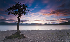 Lone Tree Sunset (OnlyEverOneJack) Tags: longexposure sunset sun set bay scotland long exposure angle sony wide hard sigma wideangle shore nd loch grad lomond hitech lochlomond density neutral sigmalens a900 millarochy sigma1735mm sonyalpha nd110 nd10 millarochybay hardgrad sonyalphaa900