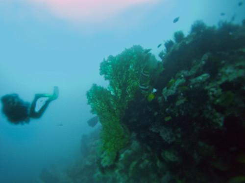 Precioso coral enorme con Idolos Moros