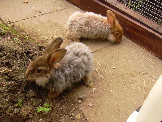 11-08-09 Clover und Hazel