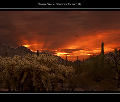 Cholla at Sunrise - Fredo_just_fredo