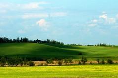 _DSC2383 (ChanHawkins) Tags: superb simply farmlands northalberta