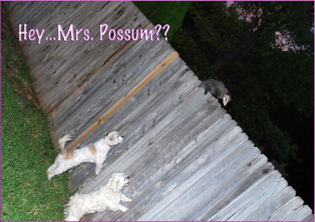 Mama-Possum