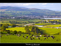Irish Landscape (bartholowaty | Photography) Tags: ireland wild irish lake west grass architecture landscape cow europe lough cows natural cork eire organic loch waterford munster irishman naturalisation republicofireland anawesomeshot dungarven
