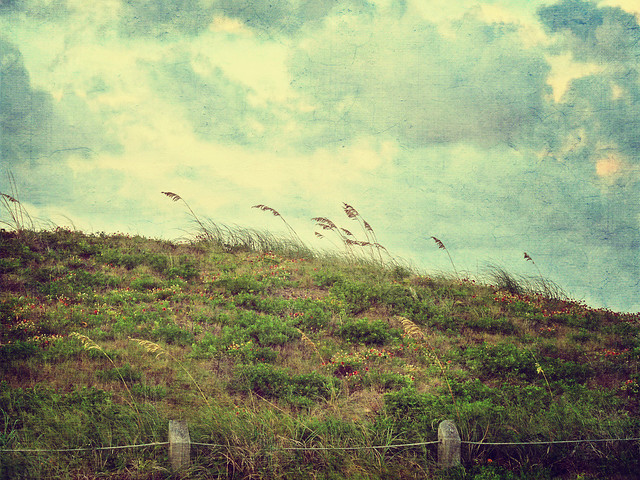 Windy hillside by the sea with wildflowers ~ Explored!
