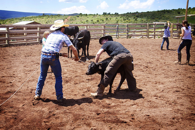 Black Mountain Colorado Dude Ranch cow corral rope roping