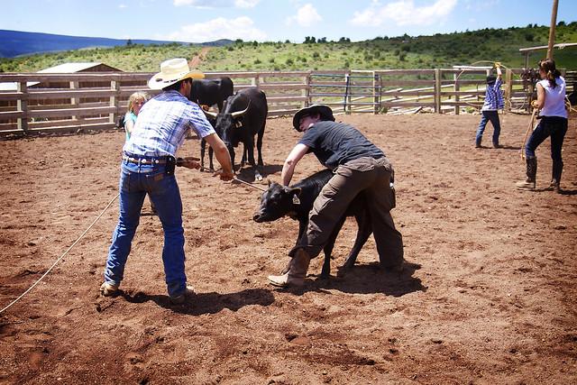 Black Mountain Colorado Dude Ranch cow corral rope roping