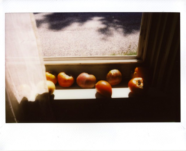 tomatoes in windowsill