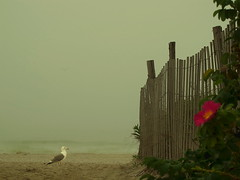 Looking for the ocean (NataThe3) Tags: ocean flower nature leaves fog leaf seagull wave
