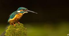 Guarda rios (GRLima) Tags: colorphotoaward peregrino27life