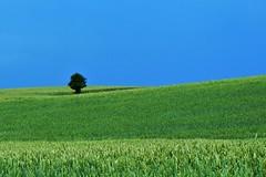 EXPLOREd tree [EXPLORE] (Marie Granelli) Tags: blue summer sky tree green field skne explore sdersltt
