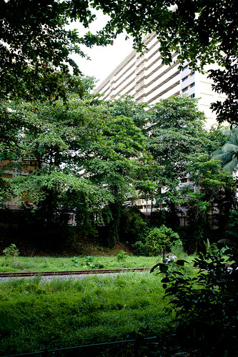 The canopy formed by trees framing a HDB block and part of the KTM track.