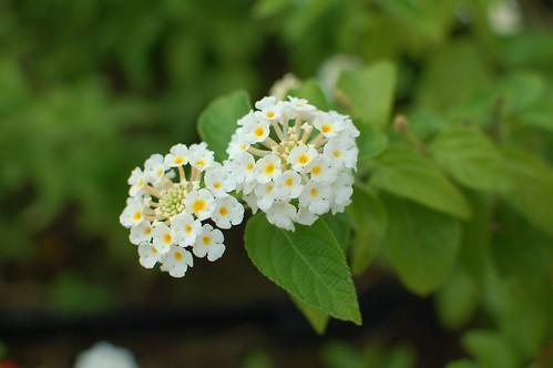 不知名小花,拍攝起來表現可以接受