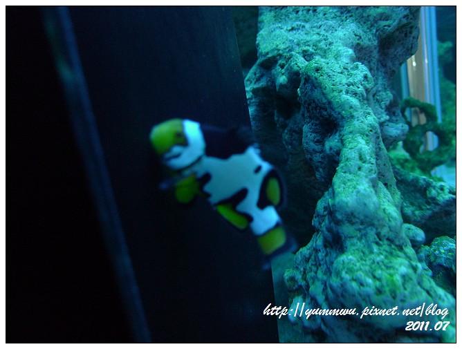 110711小丑魚主題館 (30)