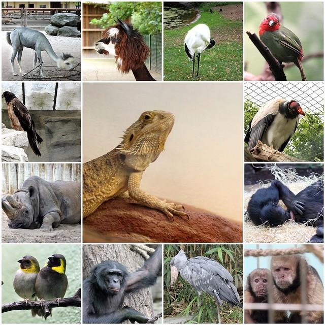 I love Zoo