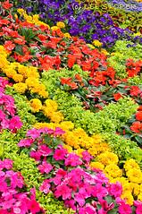 RHS Flower Show - Tatton Park - July 2010 -45 (Lee Storer) Tags: show flowers flower july 2010 rhs tatton royalhorticulturalsociety displaygarden tattonpark2010