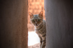 Kasbah Cat (TheFella) Tags: africa sunlight slr window animal digital cat photoshop canon eos photo high eyes dynamic northafrica pussy ears whiskers morocco photograph processing maghreb 5d dslr range ouarzazate pussycat hdr highdynamicrange markii kasbah postprocessing photomatix kingdomofmorocco 5dmarkii