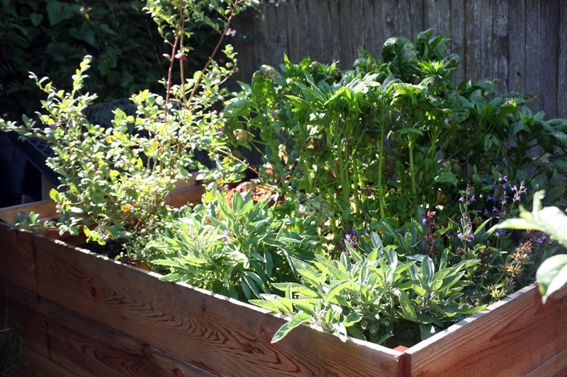 tall raised bed