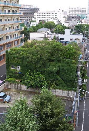 Nature 1, House 0 by Rollofunk