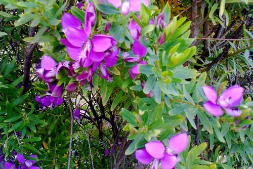 Flowers (#17)