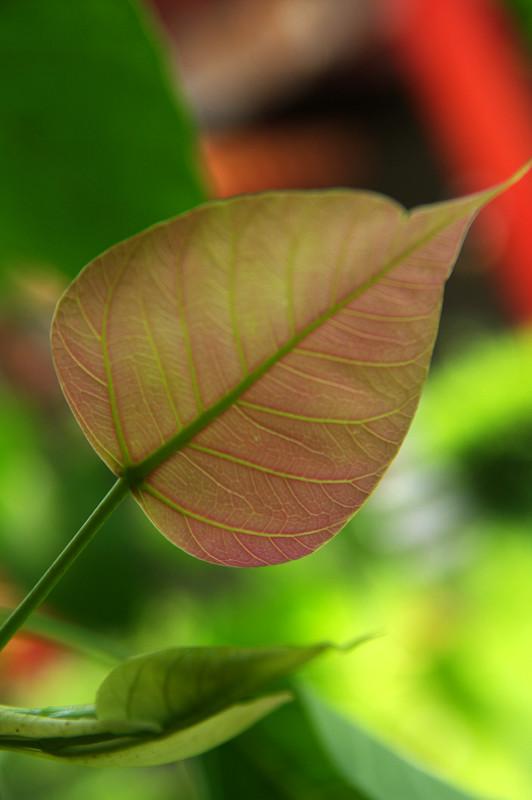隨拍(真的是隨便拍):「不過就是幾片葉子」