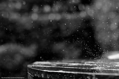 Drops (Edward Grant.) Tags: white black wet water rain speed ed frozen drops high interesting flickr grant drop edward impact splash capture