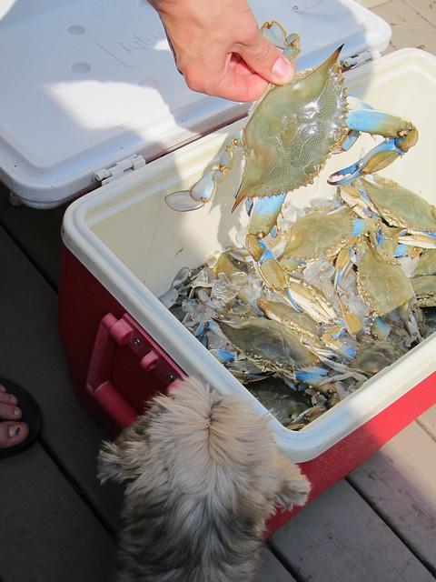 Crabbing et al 038