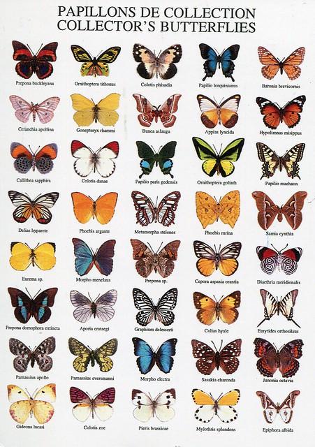 Papillons de collection