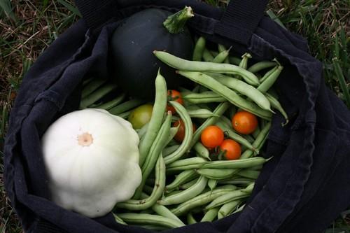 GardenHarvestJuly2011