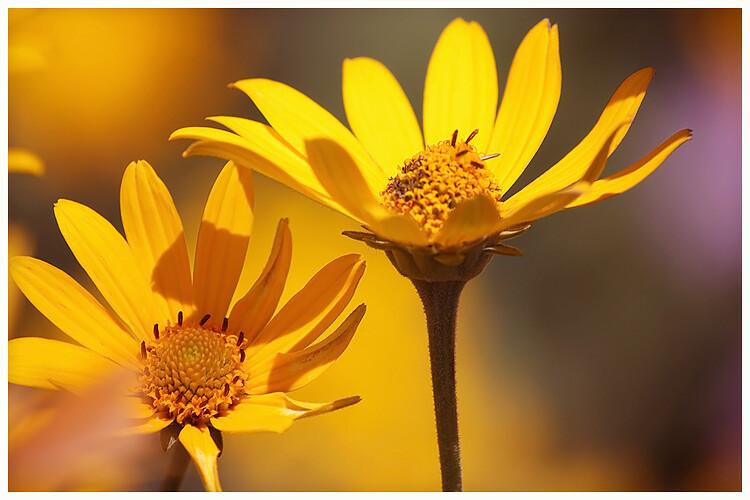 IMAGE: http://farm7.static.flickr.com/6124/5975591201_e84cf0736e_b.jpg