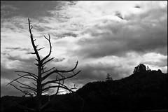 Dead tree under dark sky