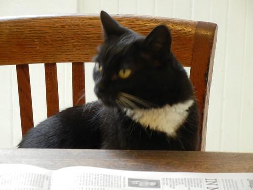 Cat _ 4015