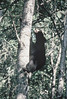 """ Cub.. A Climbing "" (Wolverine09J ~ 1 Million + Views) Tags: nature animals blackbear wildlifesanctuary jwpflickrupdatesjuly2011"
