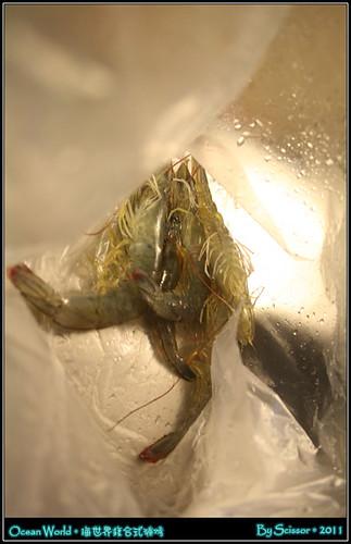 剛撈的鮮蝦