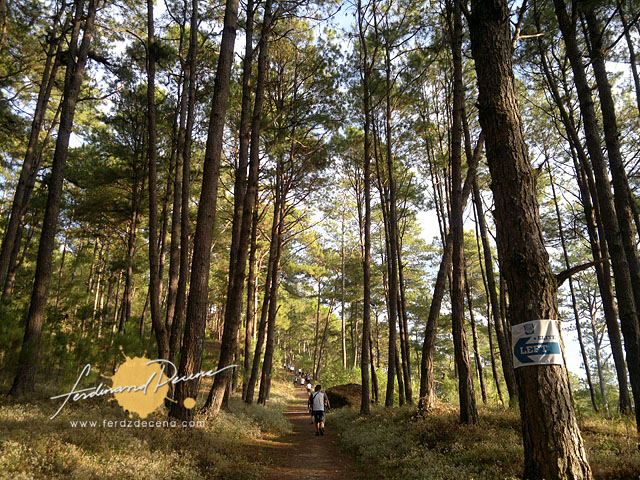 Camp John Hay Trail Run